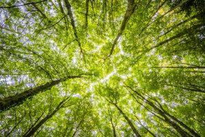 CO2 reductie | Fronik Infra BV